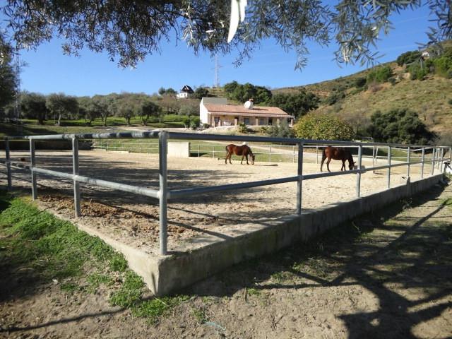 Villa  Finca en vente   à Monda