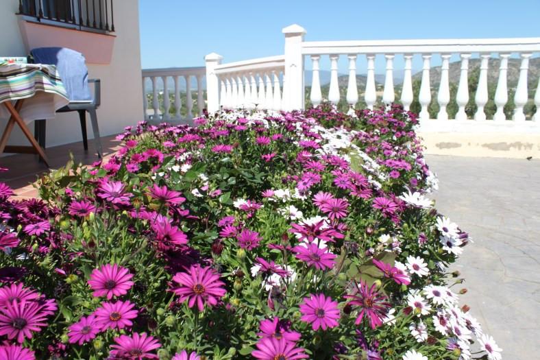 House en Alhaurín el Grande R3465358 53