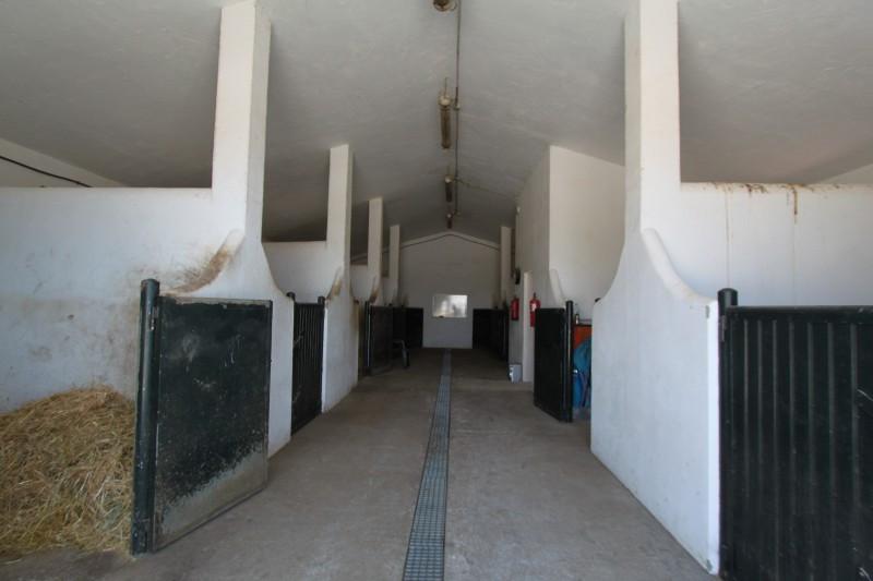 Villa  Finca en vente   à Sotogrande Alto