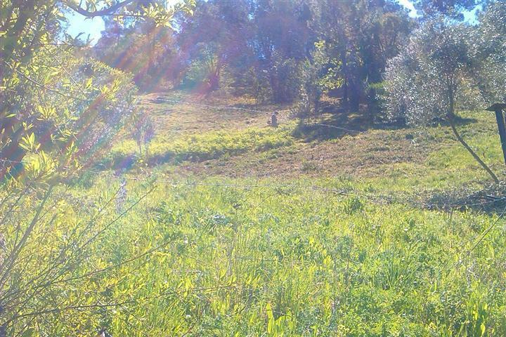 0-bed-Land Plot for Sale in Jubrique