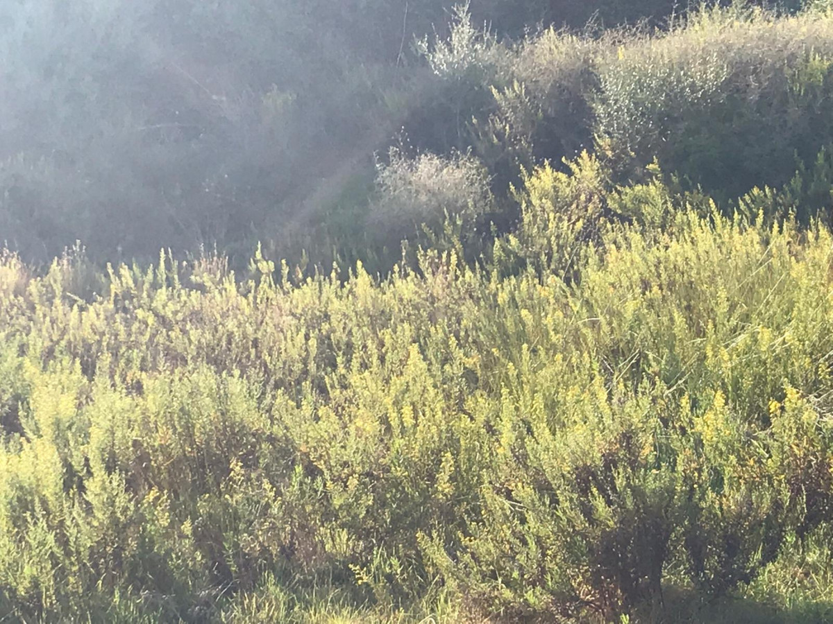 Plot/Land for sale in Valle Romano, Costa del Sol