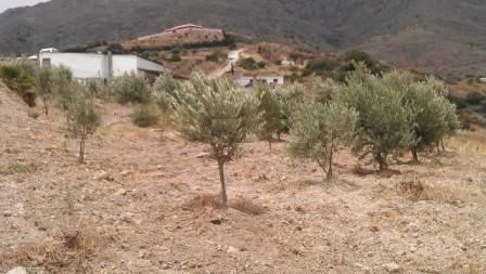 Residential Plot, Estepona, Costa del Sol. Garden/Plot 27176 m².  Setting : Country. Views : Sea, Mo,Spain
