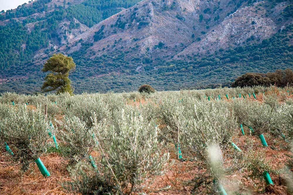 Finca for sale of 100 ha next to the Alcaiceria, in Alhama de Granada, known as the Huerta Grande. C,Spain