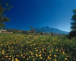 Jord - ejendomsmægler i La Quinta