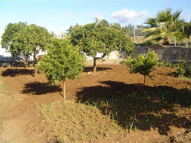 Jord til salg i La Quinta