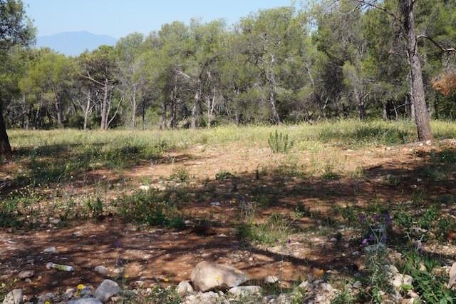 Plot - Sierra Blanca