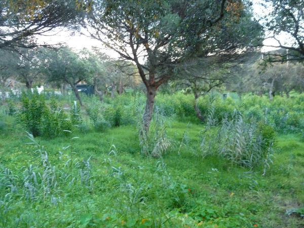 Plot in Hacienda Las Chapas
