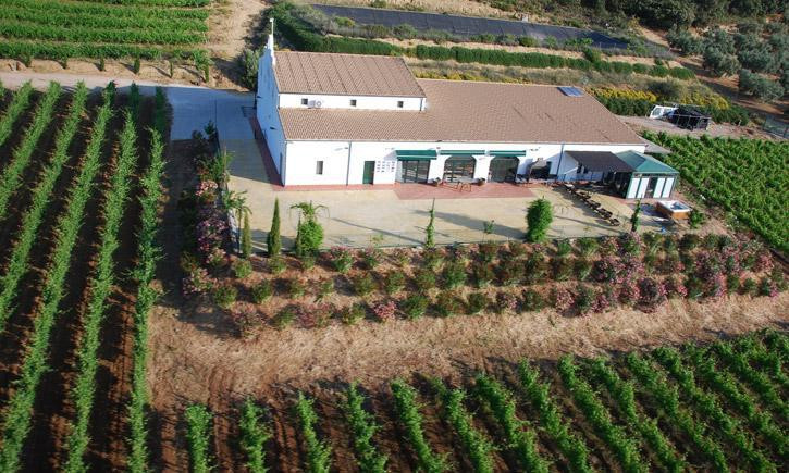 Vineyard - Ronda