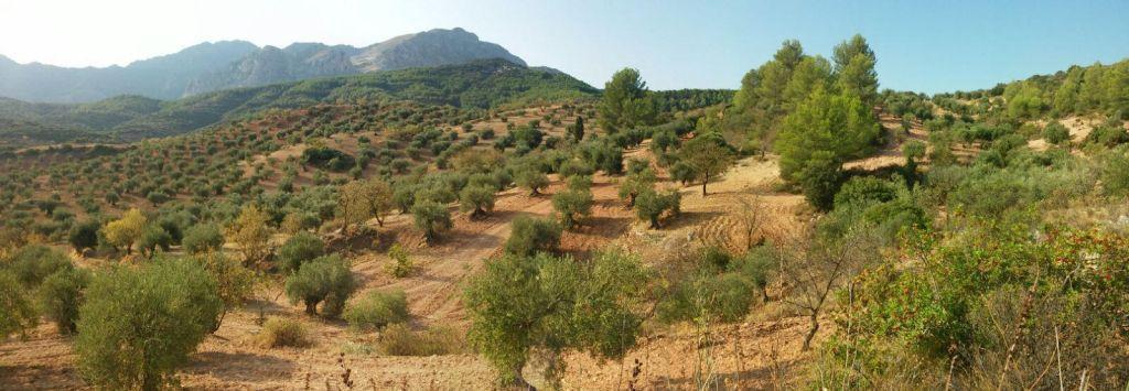 Villa, Finca  en venta    en El Burgo