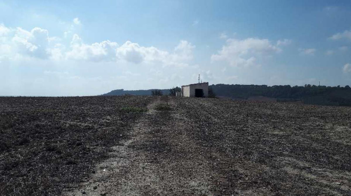 RUSTIC FLOOR FOR SALE IN JEREZ DE LA FRONTERA, PROVINCE OF CADIZ.  Rustic land located in the munici,Spain