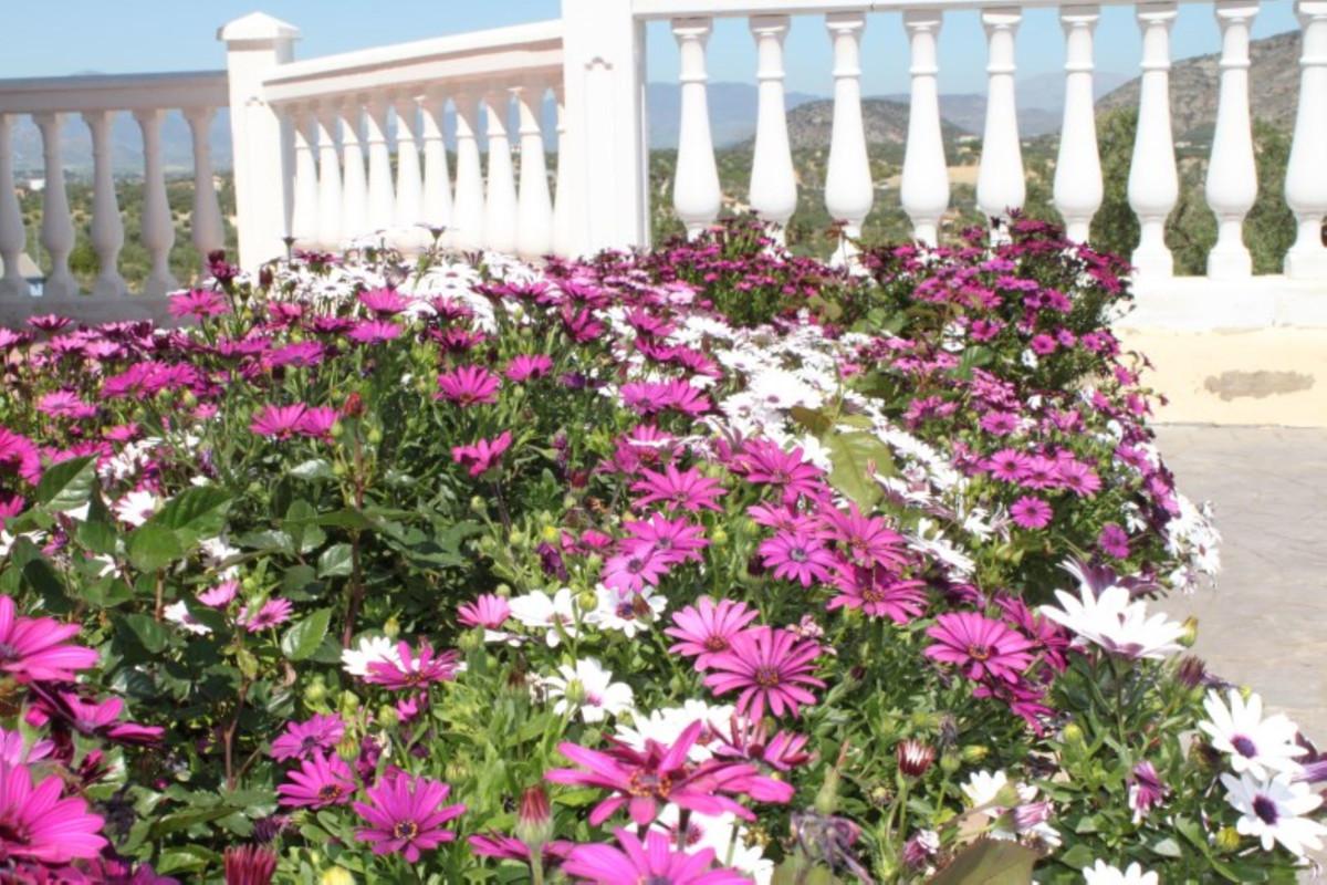 Hus in Alhaurín el Grande R3744406 6