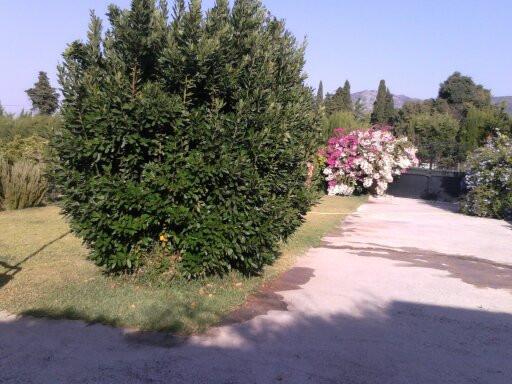 Hus in Alhaurín de la Torre R3116326 9