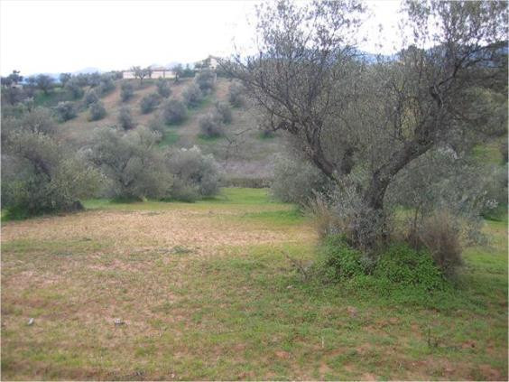 8.000m2 finca near by the road for sale with own well and elecricity, 20 min distance to the airport,Spain