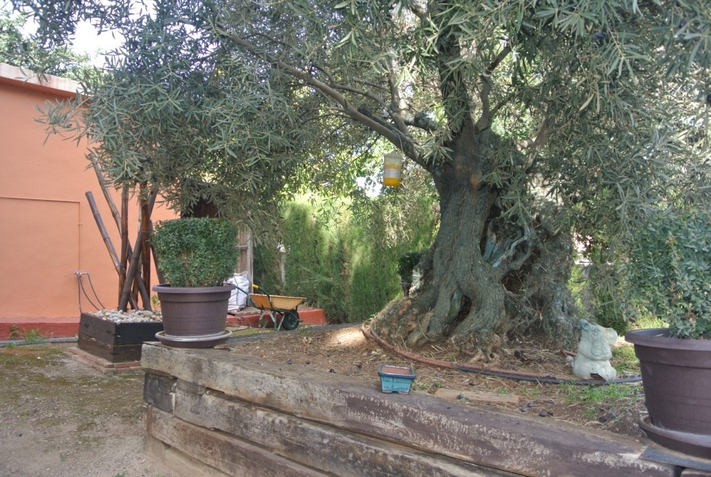 House in Alhaurín de la Torre R3364327 44