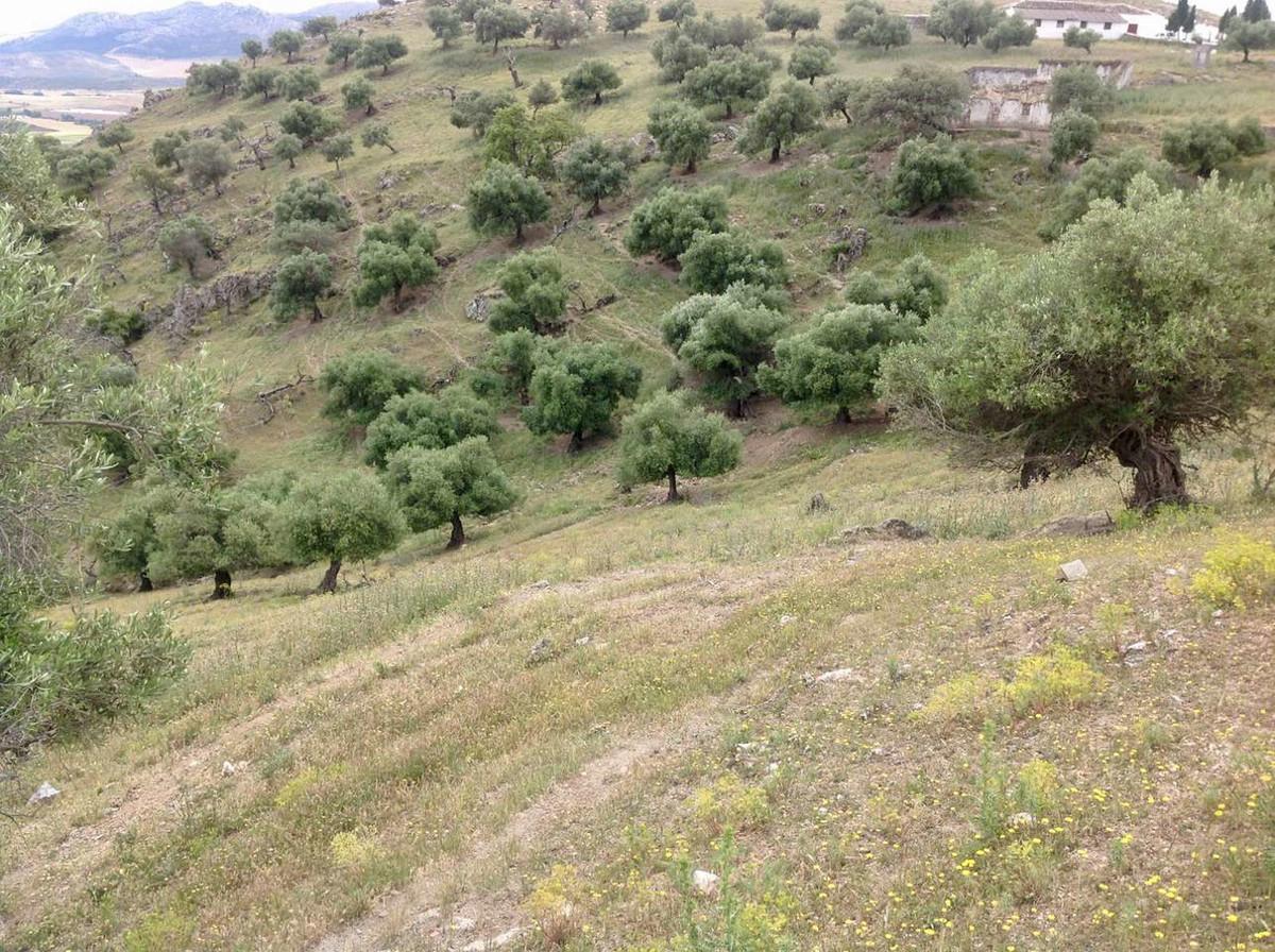 Plot/Land for sale in Cañete la Real