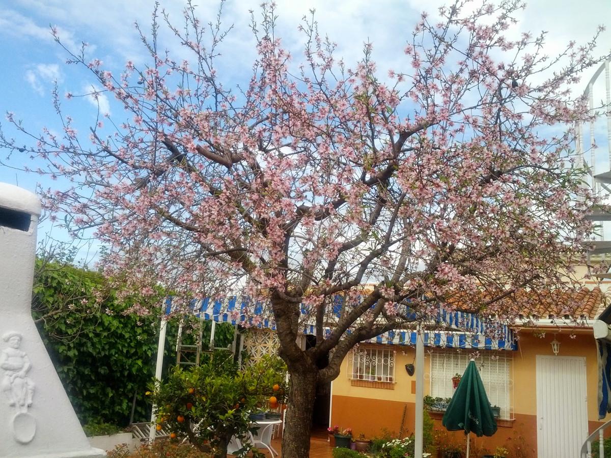 House en Alhaurín de la Torre R3688931 19