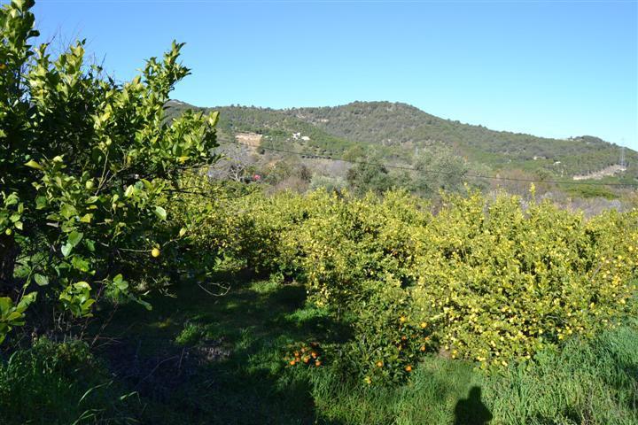 0-bed-Land Plot for Sale in Monda