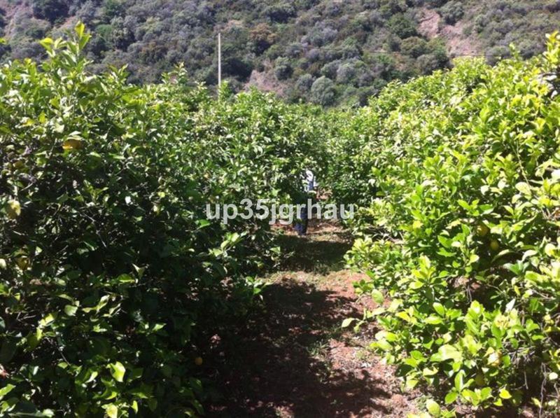 0-bed-Land Plot for Sale in Estepona