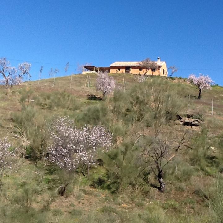 Villa, Finca  en venta    en Alora