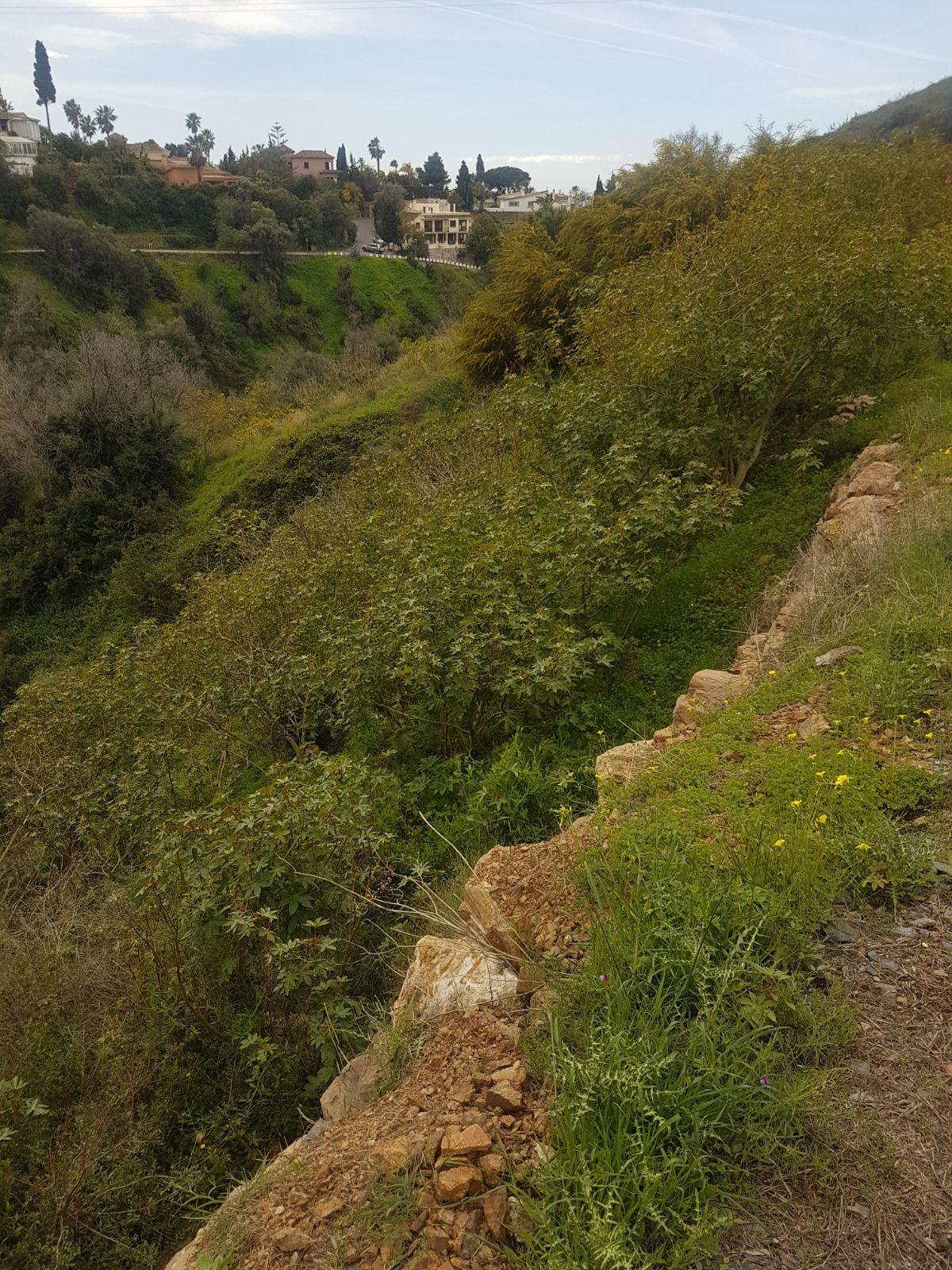 Plot/Land for sale in El Rosario