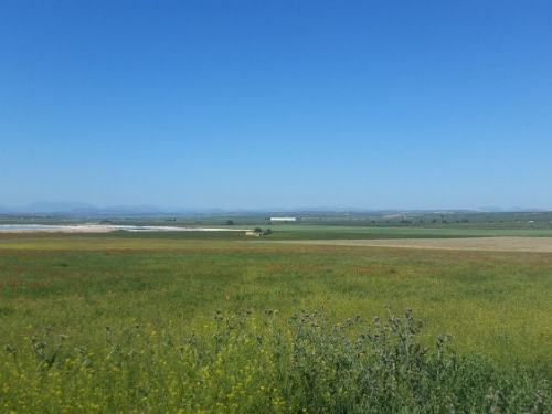 Extensive Finca for sale of 200.000 m2, just 5 km from Fuente de Piedra, a farm with great exploitat,Spain