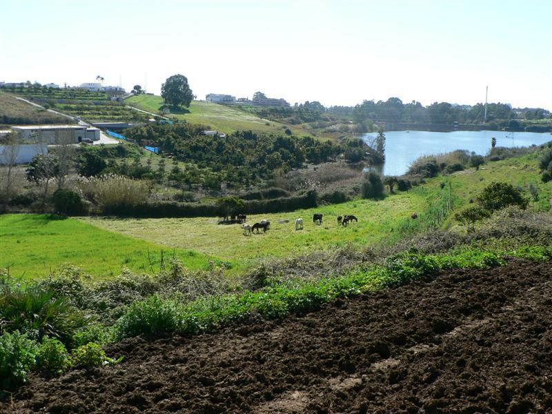 Plot Land for sale in San Pedro de Alcántara, Costa del Sol