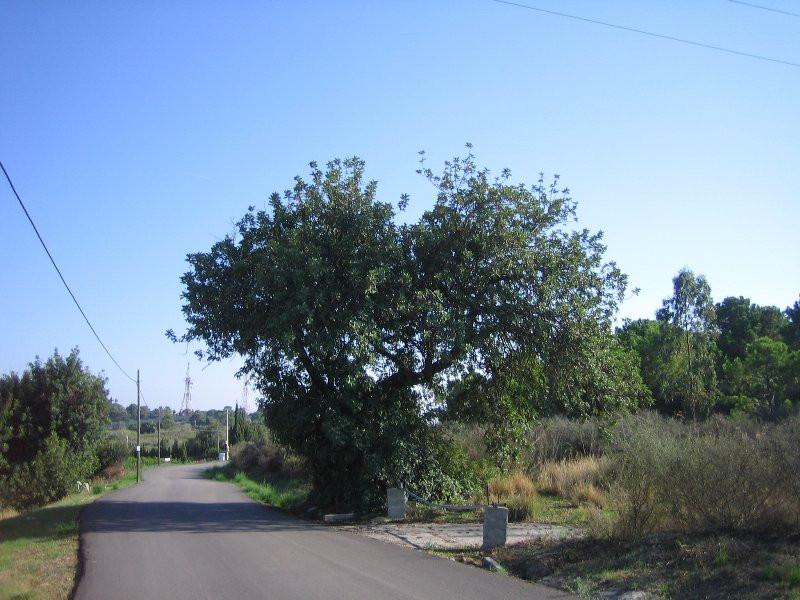 Plot - Estepona