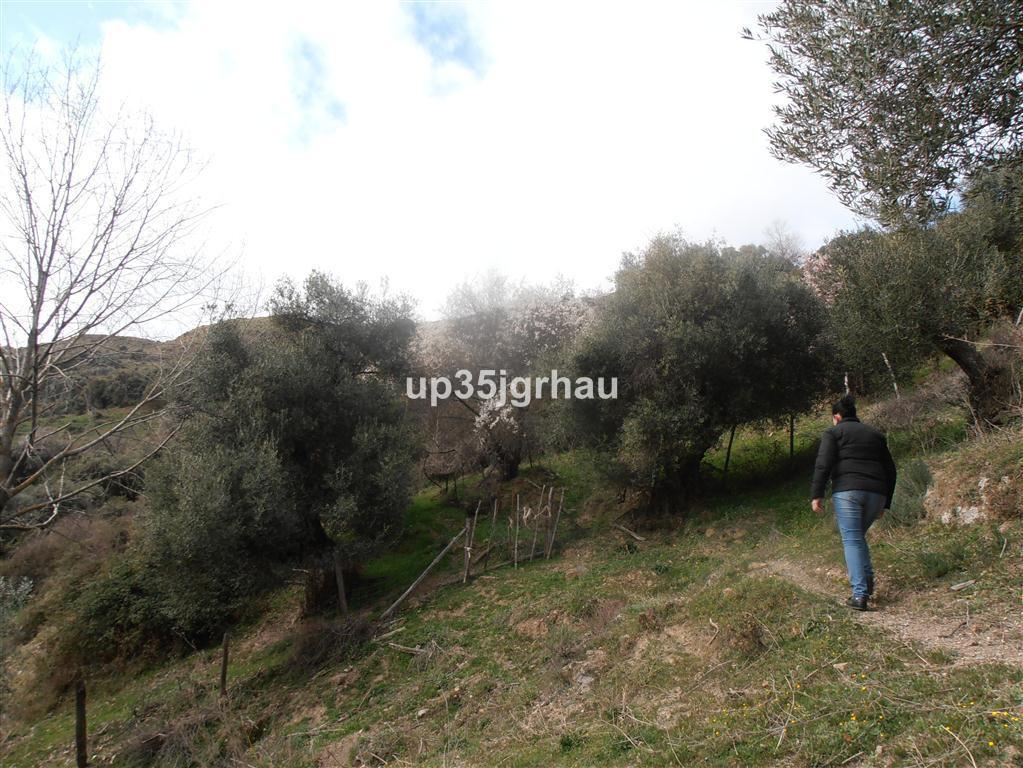 Rustic land with 4 hectares of land, located in the Serrania de Ronda, municipality of Algatocin 2 k,Spain