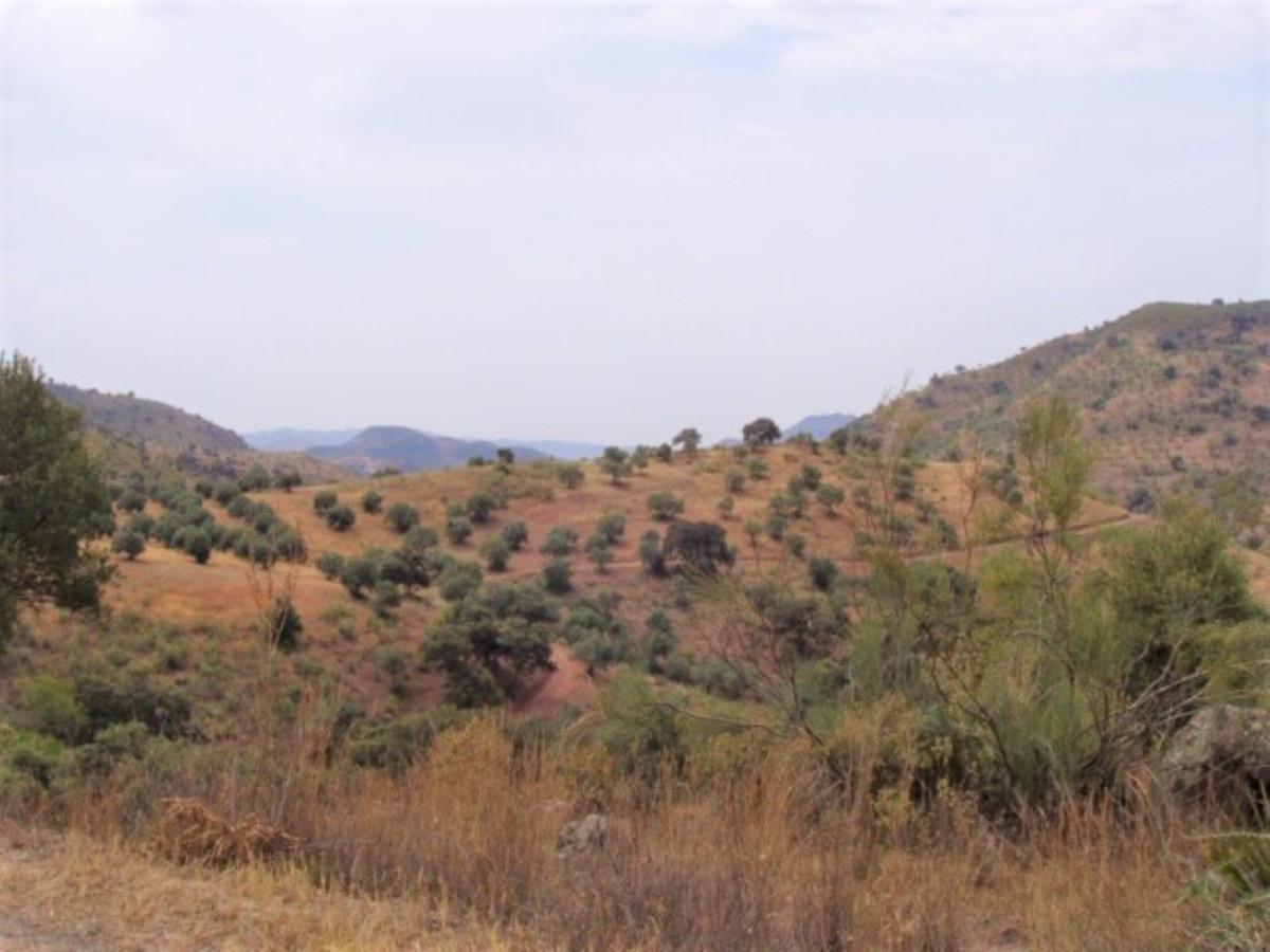 Plot in Almogía